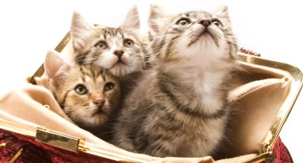 catconverters